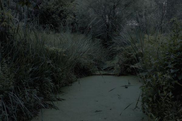 Alessandro Imbriaco's The Garden