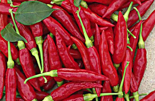 Chilli Week @ Tara Indian Restaurant