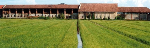 Milan's first agriculture festival