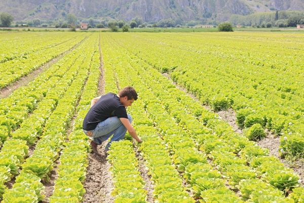 Farmers sign up for Expo2015