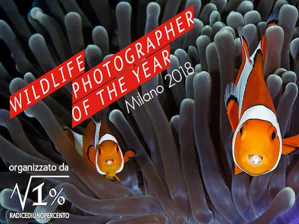 Milan hosts Wildlife Photography competition winners