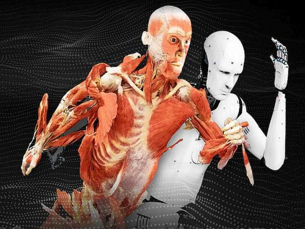 Real Bodies exhibition in Milan extended for another month