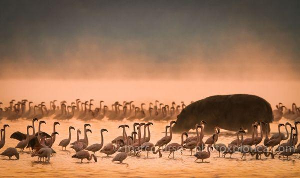 Wildlife photographer of the year - image 3