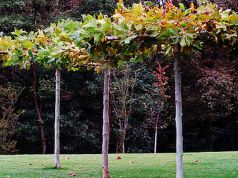 A new garden in central Milan