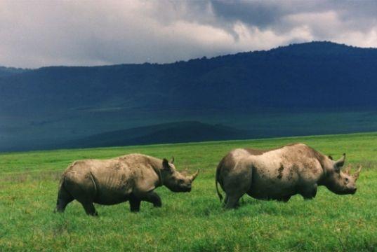 Tanzania safari 6 days package