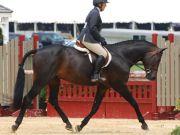 The 2012 Milan Horse Show (MHS)