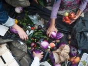 Milan opens new anti-waste food hub